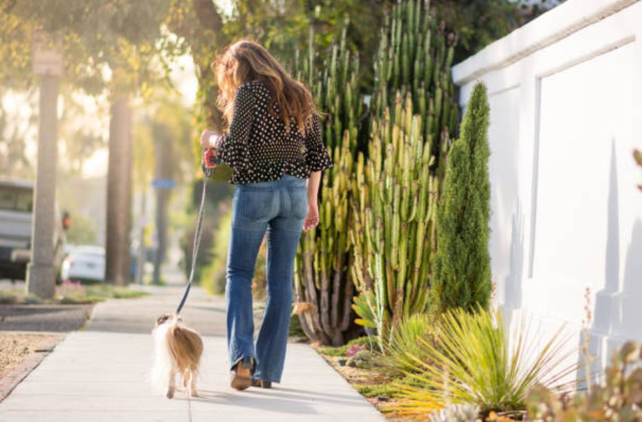 シーズ―の飼い方・病気予防
