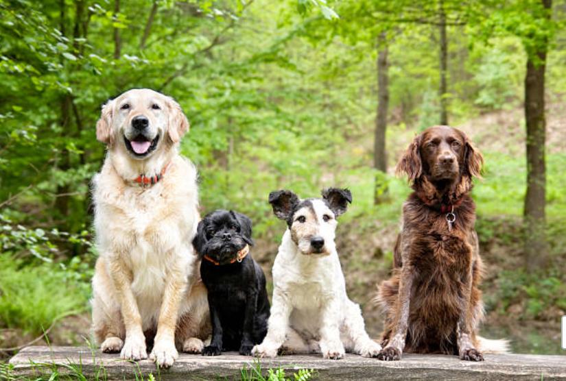 大型犬の寿命、中型犬の寿命、小型犬の寿命