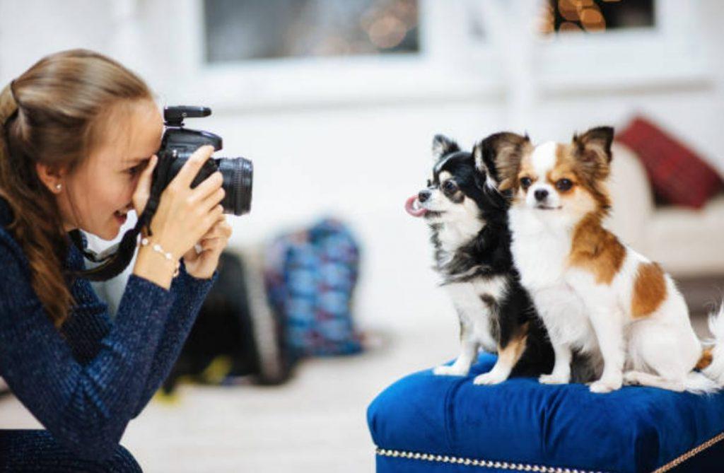 Classificação Recomendada do Photo Studio