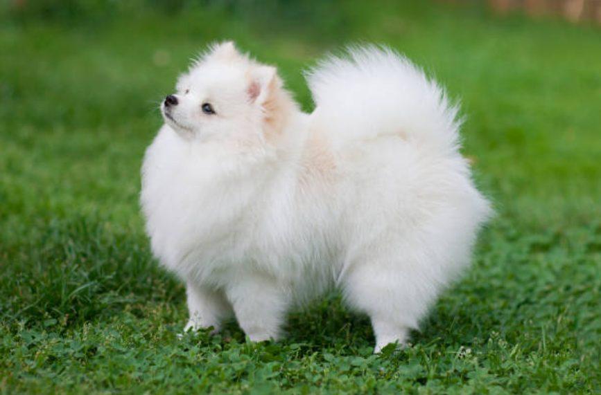 フワフワモコモコな犬に癒されること間違いなし!