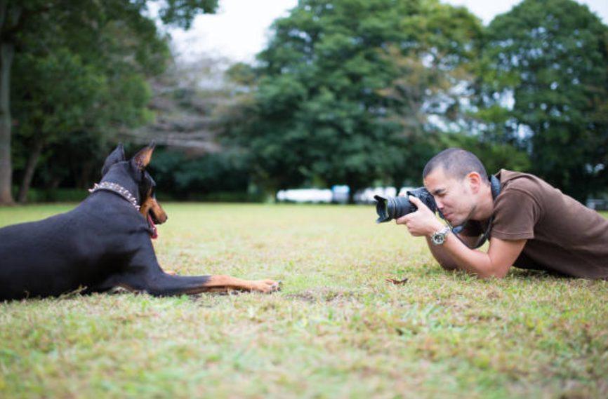 Ranking popular dos estúdios de fotografia de cães em Tóquio