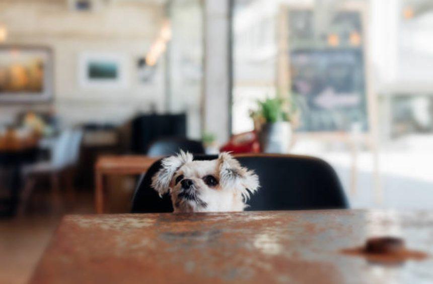 犬と行けるインスタ映えカフェはある?