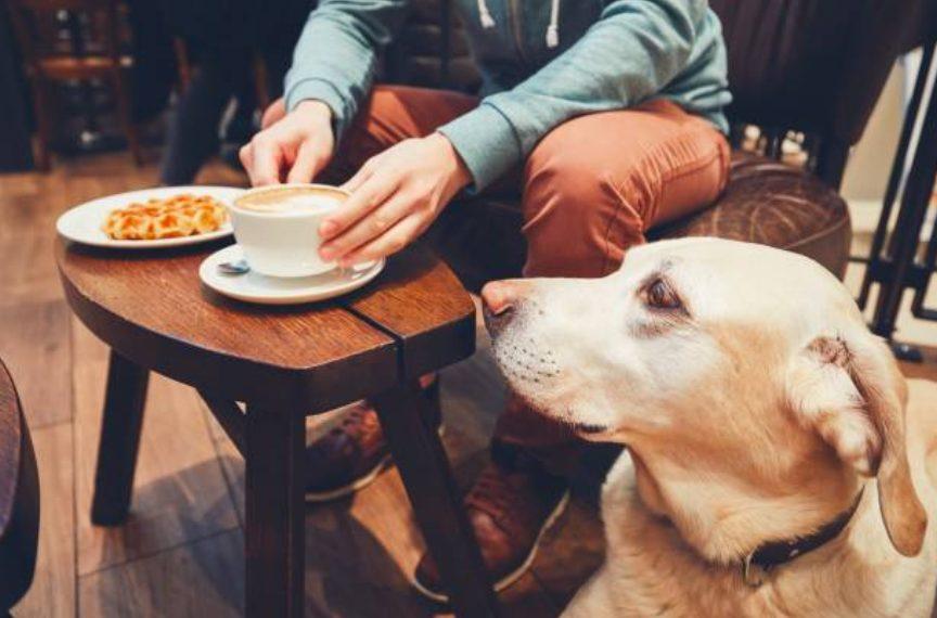 愛犬とカフェでインスタ映えできる写真を撮ろう!