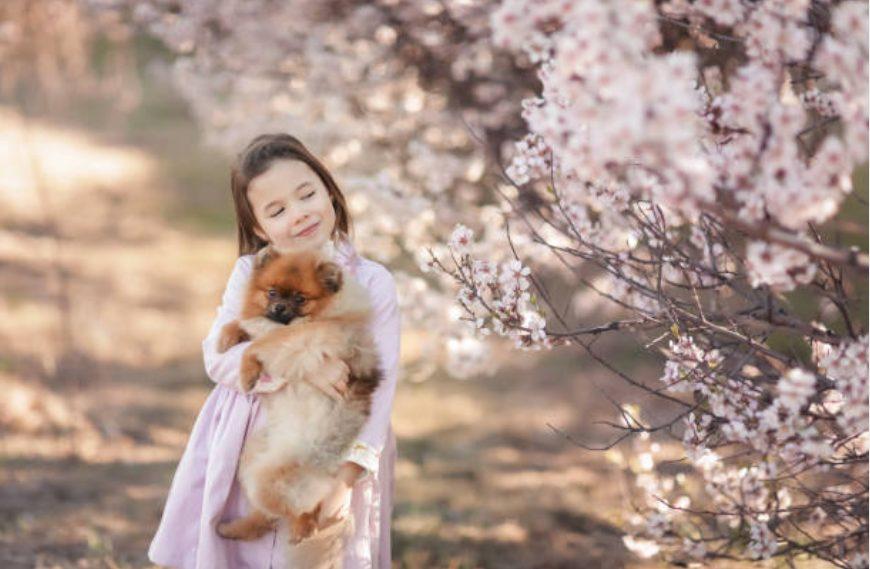 Muy popular! ¡Clasificación de Instagrammer para perros japoneses!