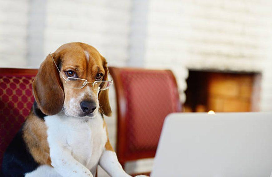 ¡Los 10 mejores rankings de perros inteligentes! Inteligente y fácil de criar