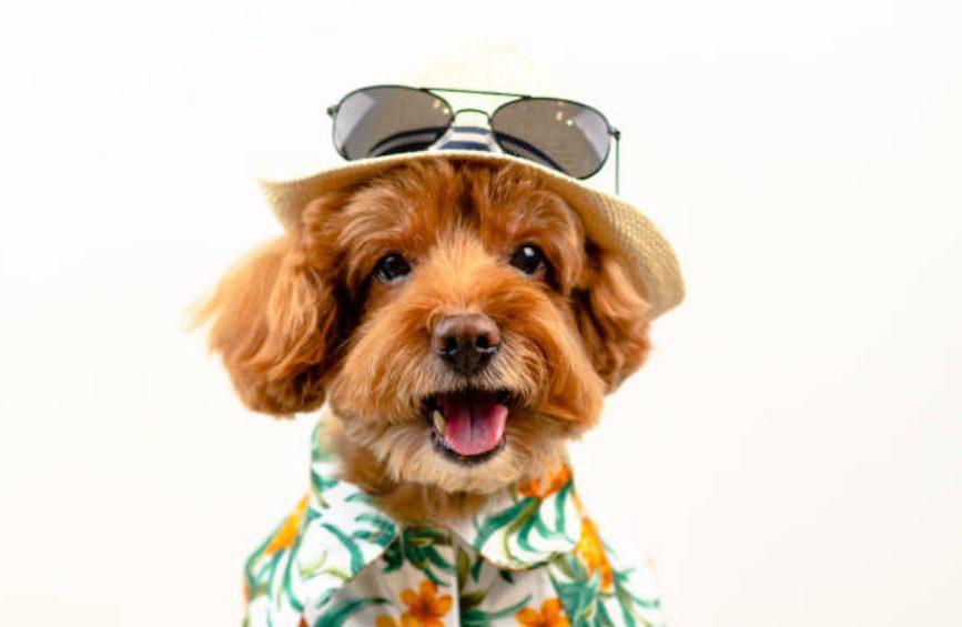 お気に入りが見つかる、ハワイ語の人気の犬の名前