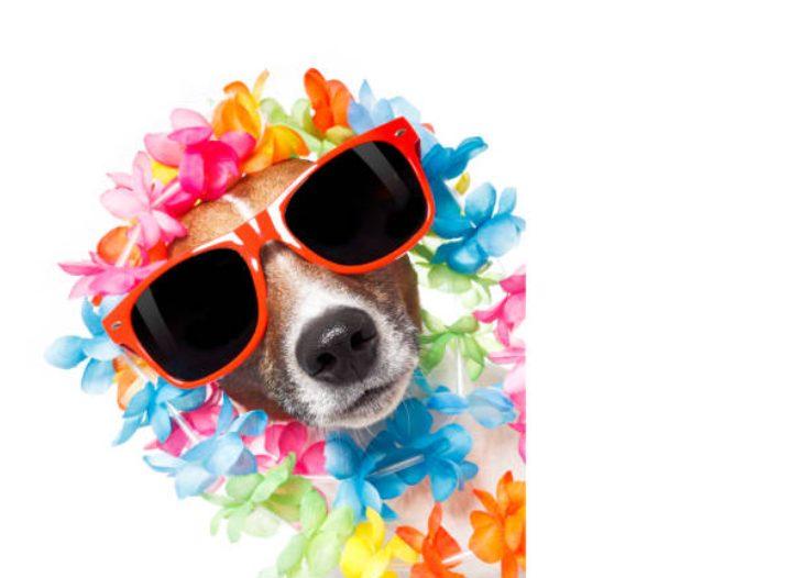 愛犬の名前にはハワイ語がおすすめ