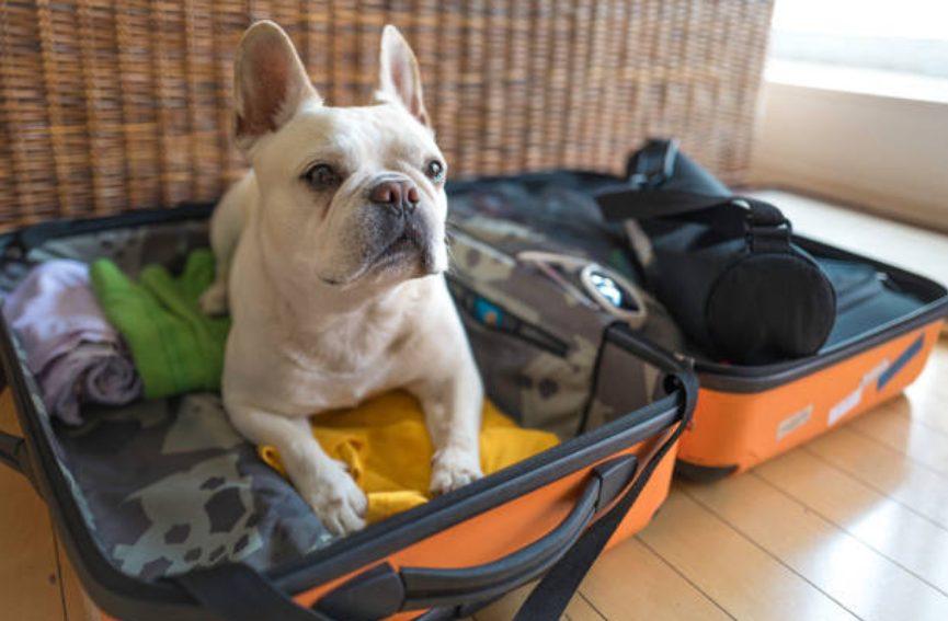 Um eine lustige Reise mit Ihrem Hund zu haben