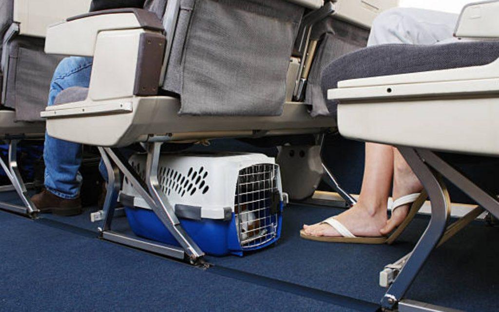 Für Hunde, die selten in Autos, Züge oder Flugzeuge steigen, ist es stressig, auf einer plötzlichen Reise lange zu reiten. Es gibt verschiedene Ursachen für Stress, wie z. B. Fahrzeugvibrationen, ungewohnte Geräusche und Gerüche.