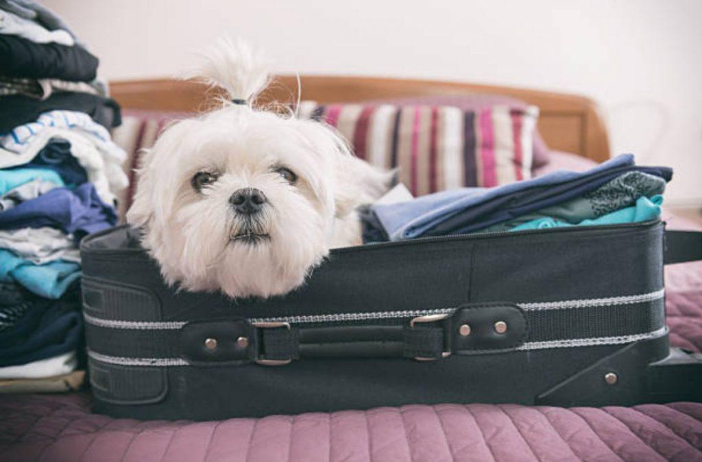 Reisetechniken, die den Stress Ihres Hundes minimieren
