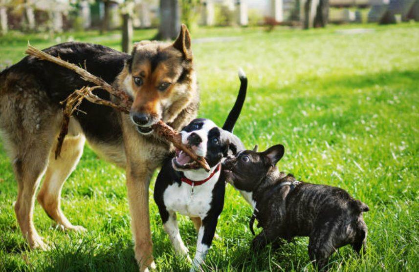 犬同士のマナー違反な遊び方