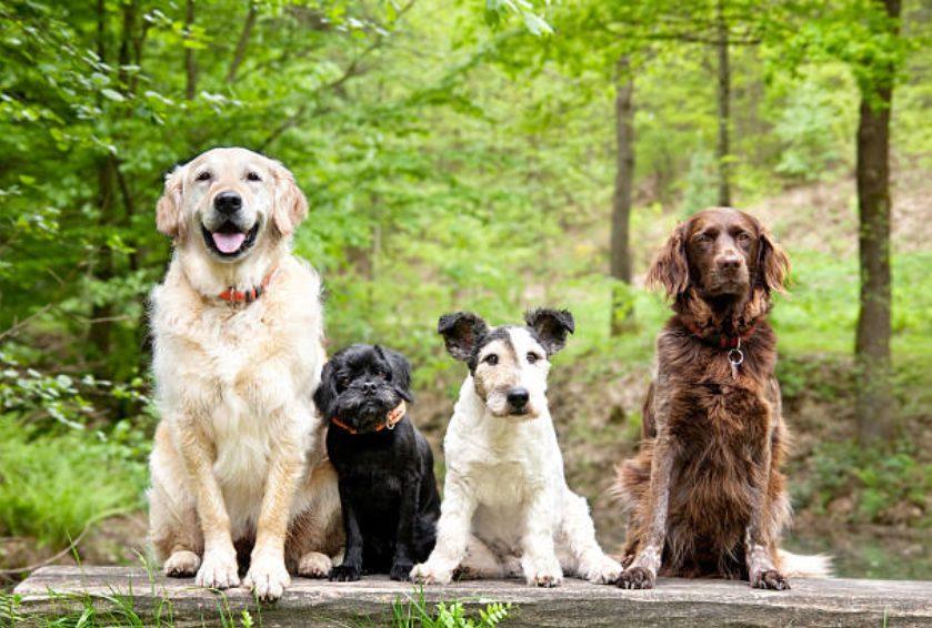 犬同士で楽しく遊んでもらうために
