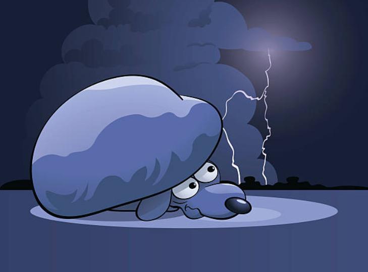 Você pode tomar medidas! ? Apresentando a razão pela qual os cães têm medo de raios e contramedidas!