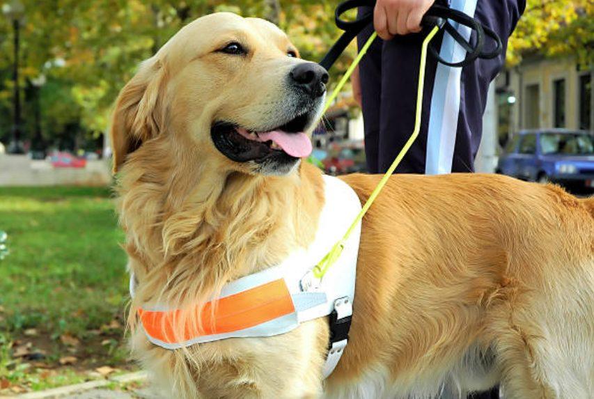 キャリアチェンジ犬 盲導犬